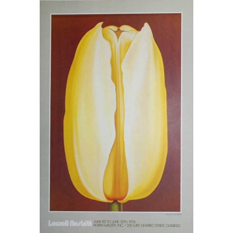 Yellow Tulip - 1978
