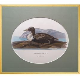 Magnus von Wright Art Birds 1