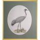 Magnus von Wright Art Birds 2