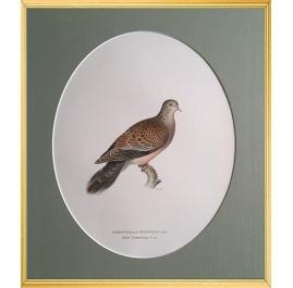Magnus von Wright Art Birds 3