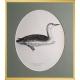 Magnus von Wright Art Birds 4
