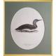Magnus von Wright Art Birds 5