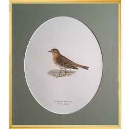 Magnus von Wright Art Birds 6