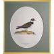 Magnus von Wright Art Birds 7