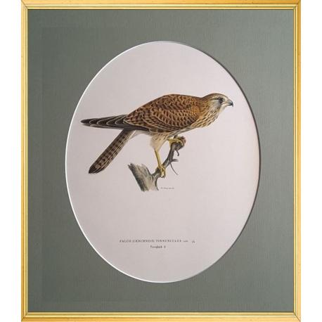 Magnus von Wright Art Birds 8