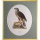 Magnus von Wright Art Birds 9
