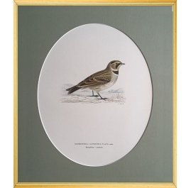 Magnus von Wright Art Birds 10