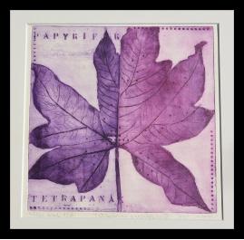 Little tetrapanax Papyrifer