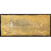 Fossielen Vissen
