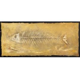 Fossilien Fisch