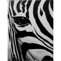 A Zebra's Eye