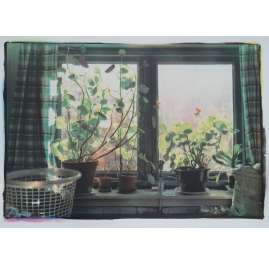 "Geraniums, from the series ""childhoodhome"""