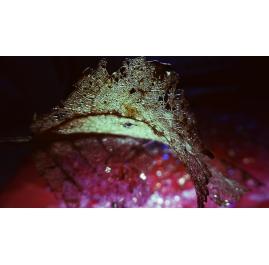 Magenta Leaf