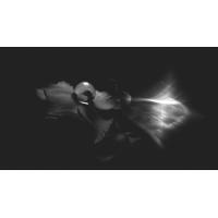 Flower Black White