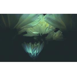 Flower White I