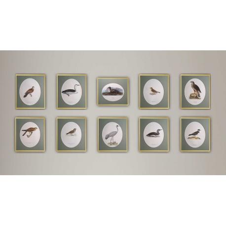 Svenska Faglar - 10 Ornithological Prints