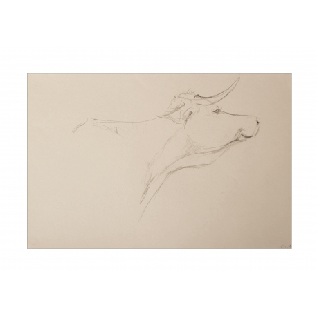 Cows VI: Maria in anticipation