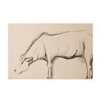 Cows VIII: Maria on the meadow